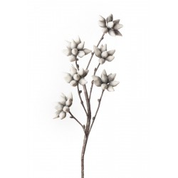 Magnolia Stellata Cm. 107 h. - L'oca Nera