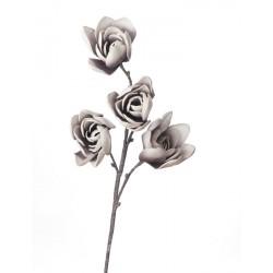 Magnolia Soulangeana Cm. 82 h. - L'oca Nera