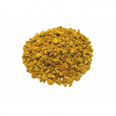 Curcuma rizoma - Botanica